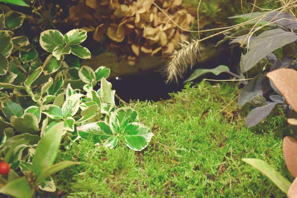 Rouwstuk met planten uit een winter tuin