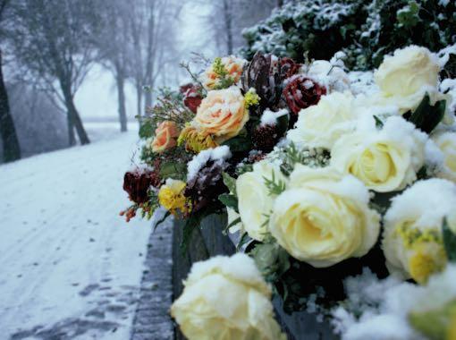 bloemen in de winter langs het pad begraafplaats xoetermeer